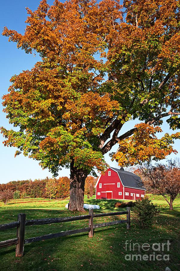Red Photograph - New England Farm Fall Foliage by Edward Fielding