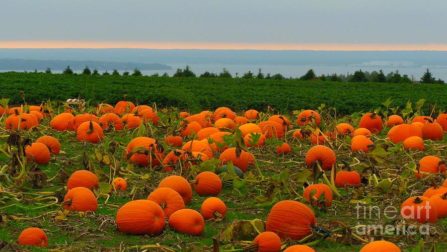 Pumpkin Photograph - New England Pumpkin Patch by Eclectic Captures