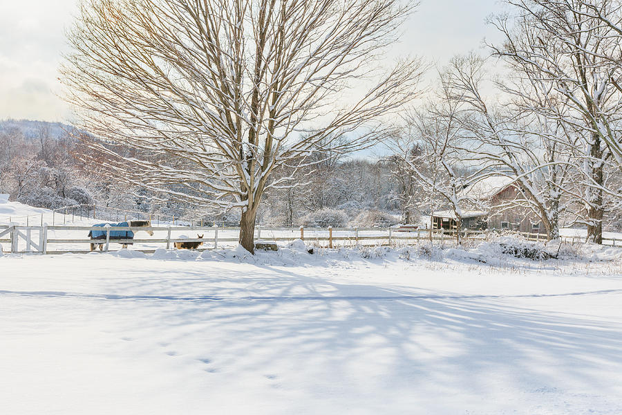 New England Winter Photograph - New England Winter by Bill Wakeley
