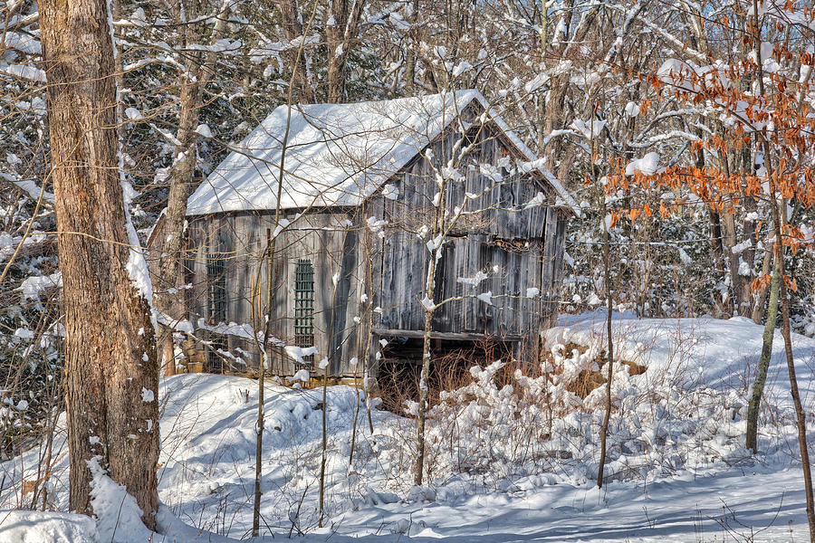 Bucolic Photograph - New England Winter Woods by Bill Wakeley