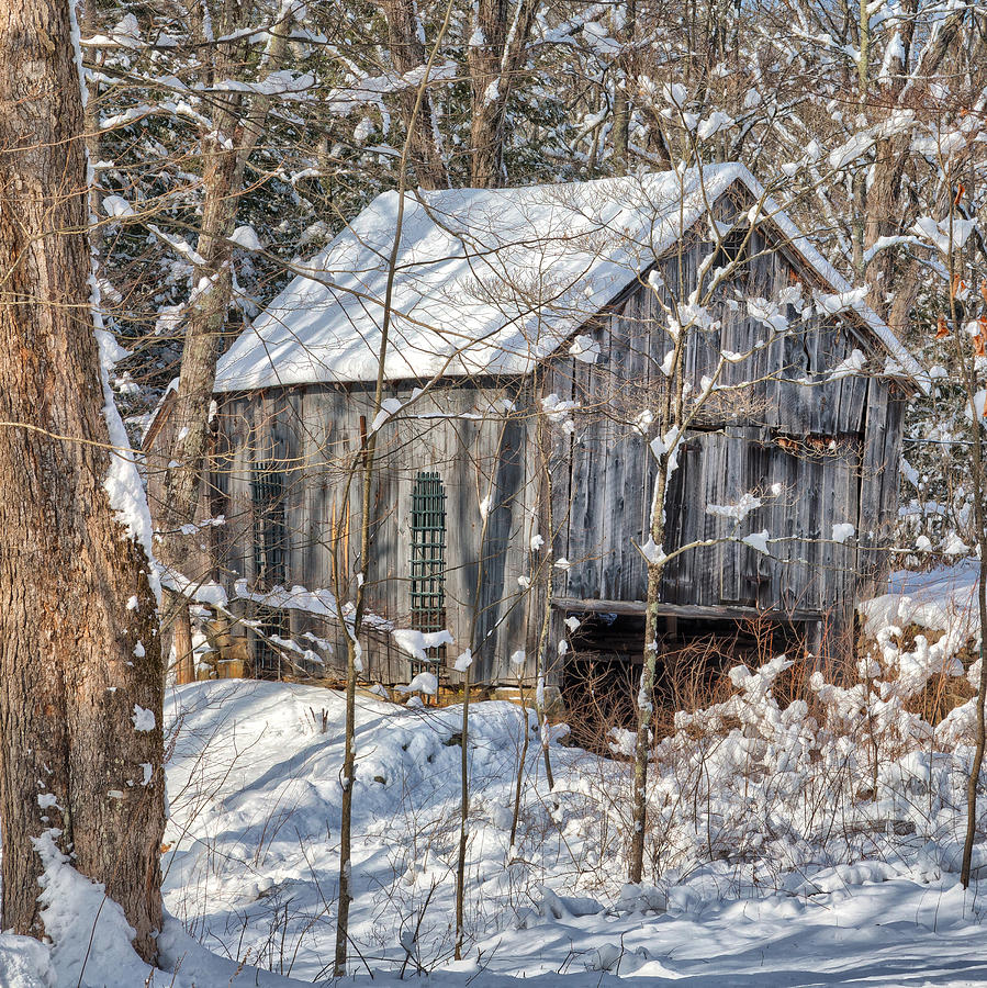 Square Photograph - New England Winter Woods Square by Bill Wakeley