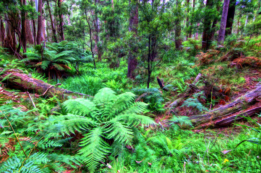New Fern Gully  by Paul Svensen