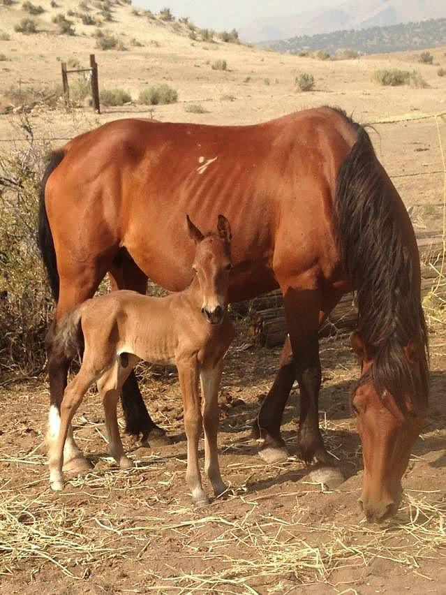 New Foal Photograph by Wynema Ranch