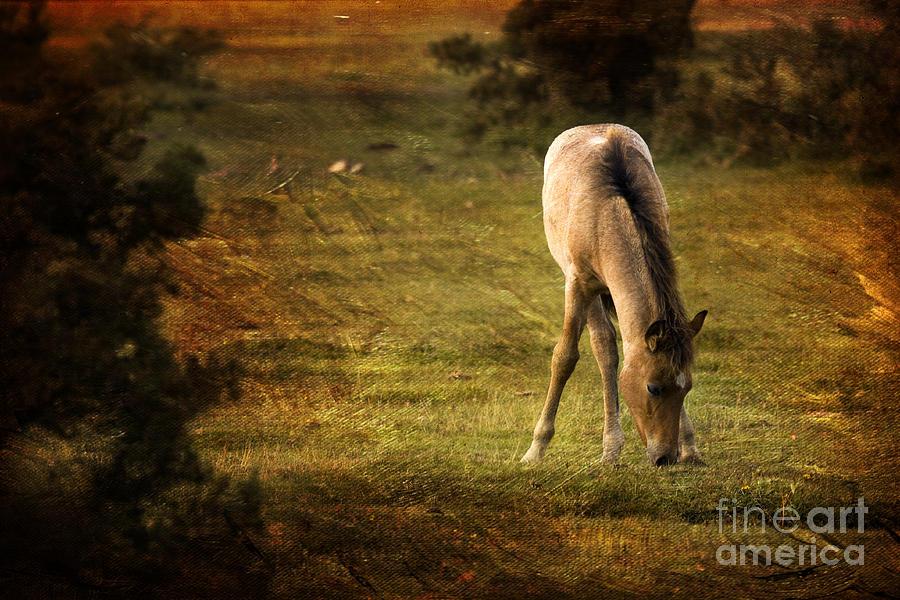 Pony Photograph - New Forest by Angel Ciesniarska