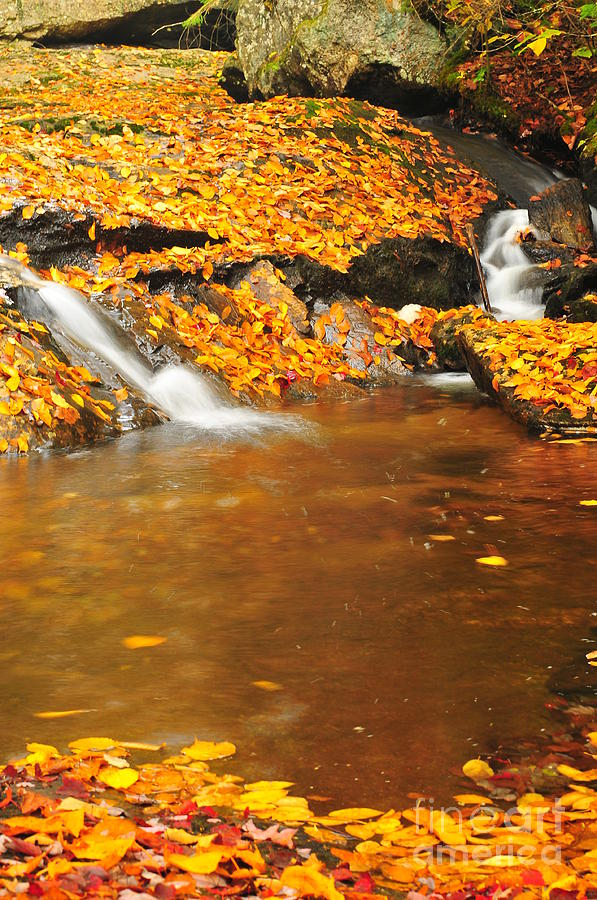 Mountain Brook Photograph - New Hampshire Stream by Catherine Reusch Daley