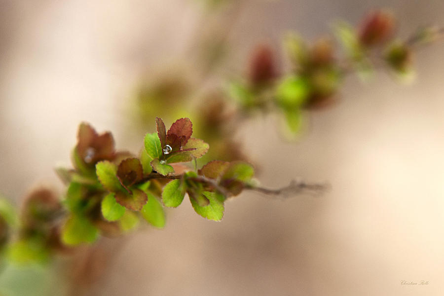 Spring Photograph - New Life by Christina Rollo