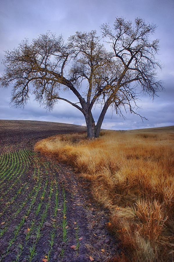 Palouse Photograph - New Life by Ray Still
