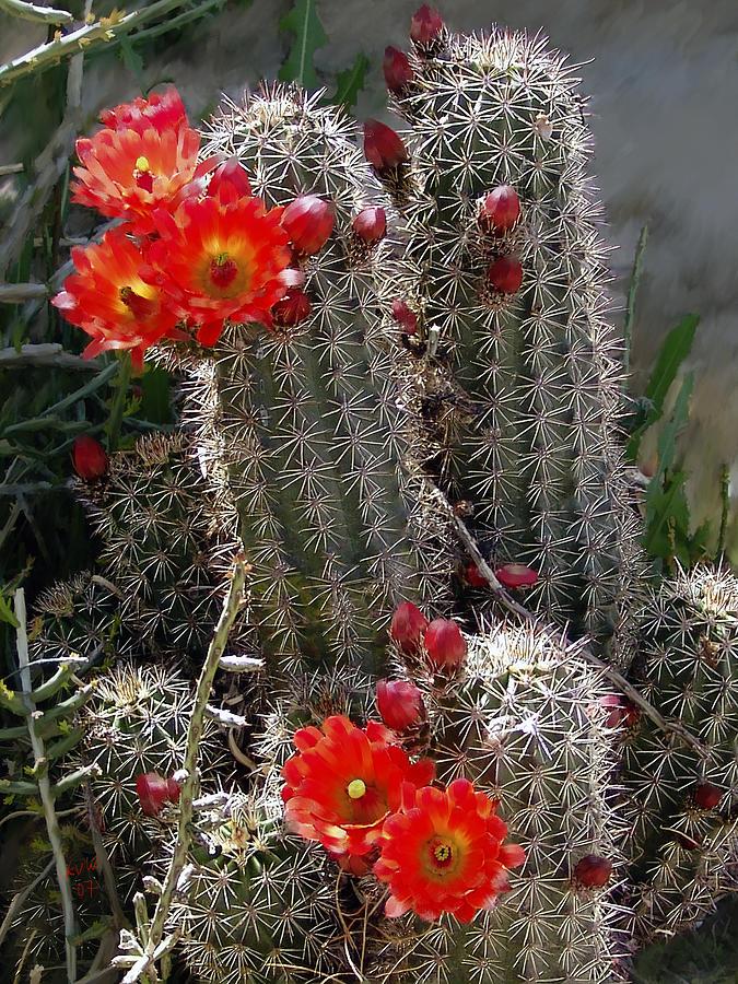 Cactus Photograph - New Mexico Cactus by Kurt Van Wagner