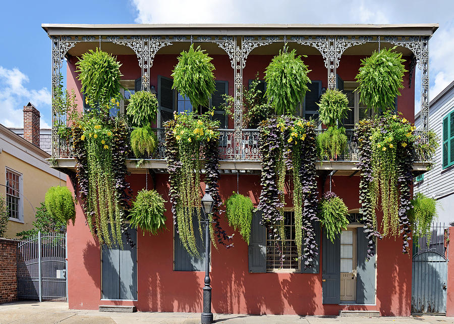 Balcony Photograph - New Orleans City Jungle by Christine Till