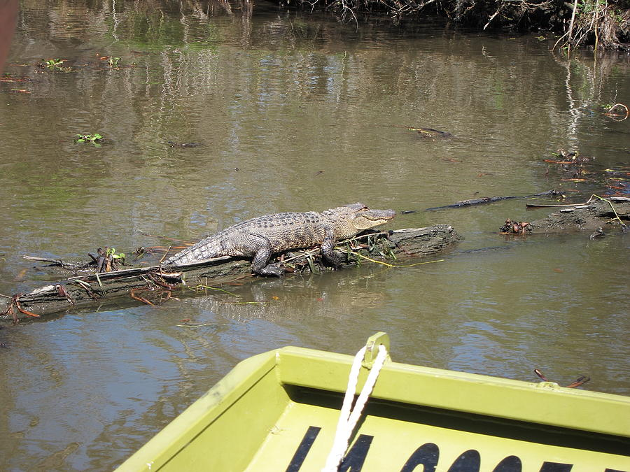 New Photograph - New Orleans - Swamp Boat Ride - 1212160 by DC Photographer