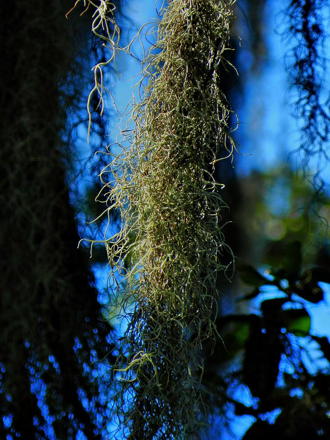 Spanish Moss Photograph - New Orleans Tm 0016 by Lance Vaughn