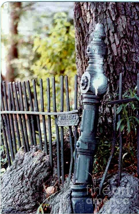 New Orleans Wrought Iron Fence Photograph - New Orleans Wrought Iron Roots by Michael Hoard