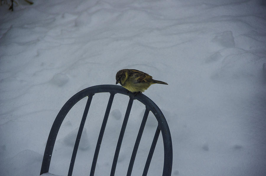 Snow Photograph - New Perch by Nathan Seavey