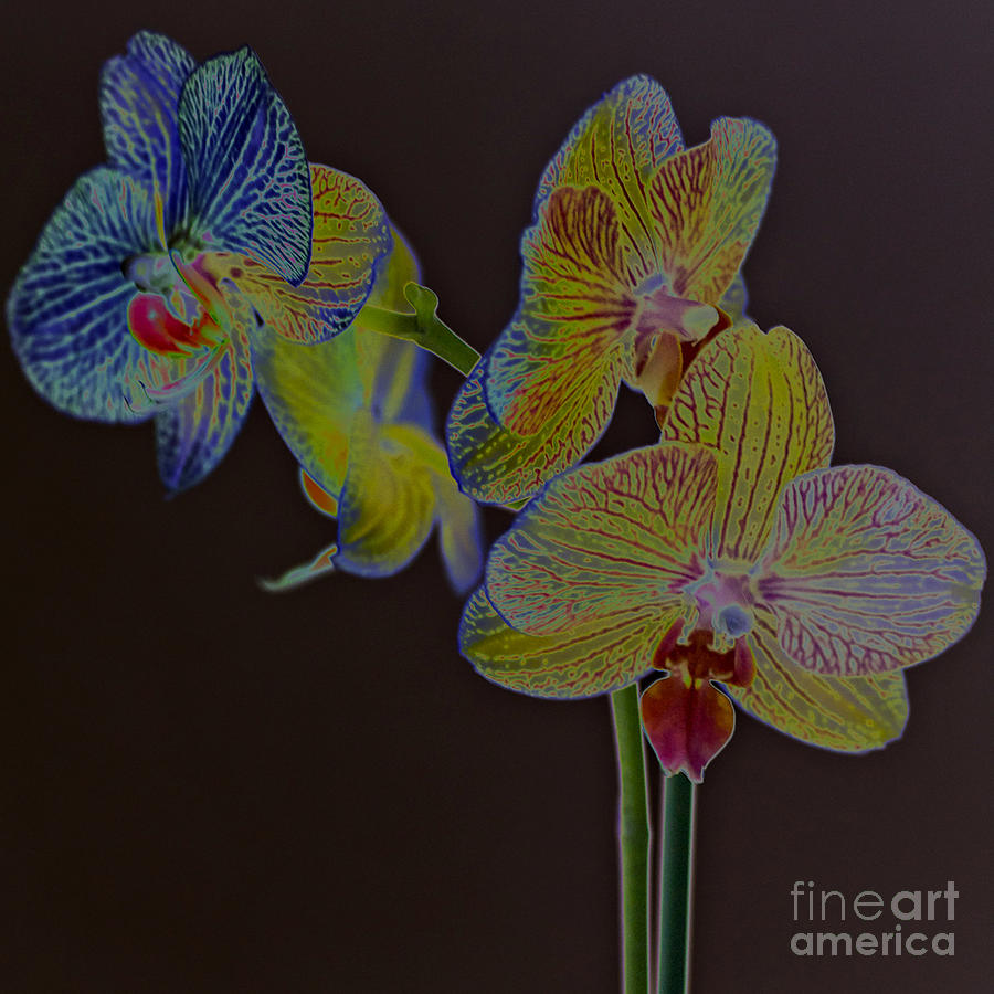 New photographic art print for sale orchids 6 photograph for Large photographic prints for sale