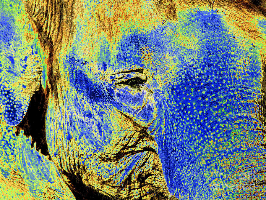Pop art elephant face photograph by toula mavridou messer for Large photographic prints for sale