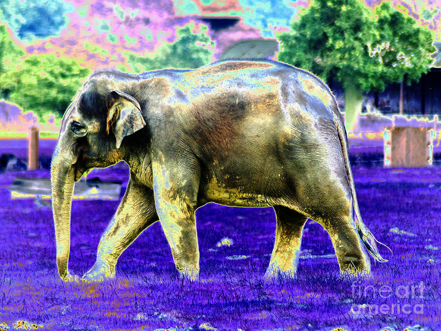 Pop art elephant photograph by toula mavridou messer for Large photographic prints for sale