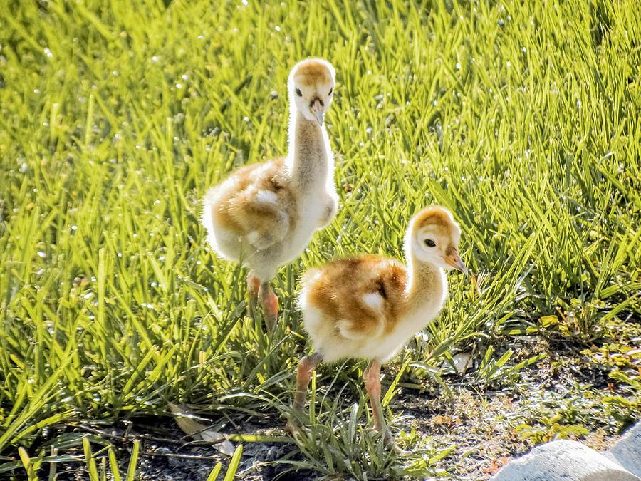Chicks Photograph - New Sunny Day by Zina Stromberg