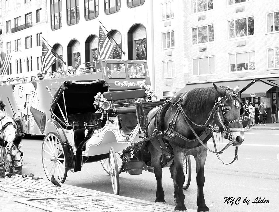 Flag Photograph - New York by Lorna Maza