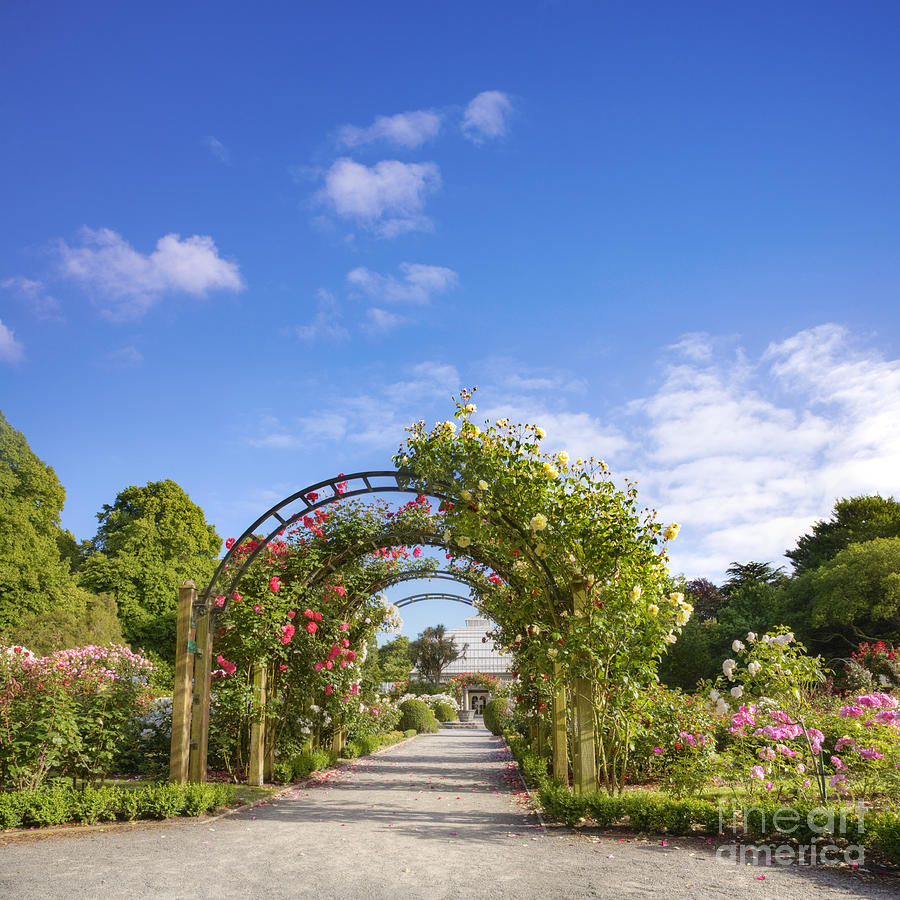 New zealand christchurch hagley park rose garden summer for Landscape gardeners christchurch