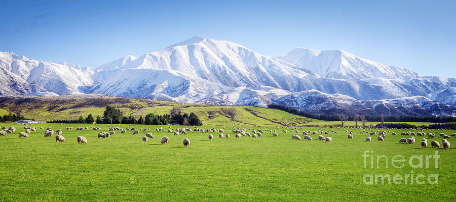 Beauty Photograph - New Zealand Farmland Panorama by Colin and Linda McKie