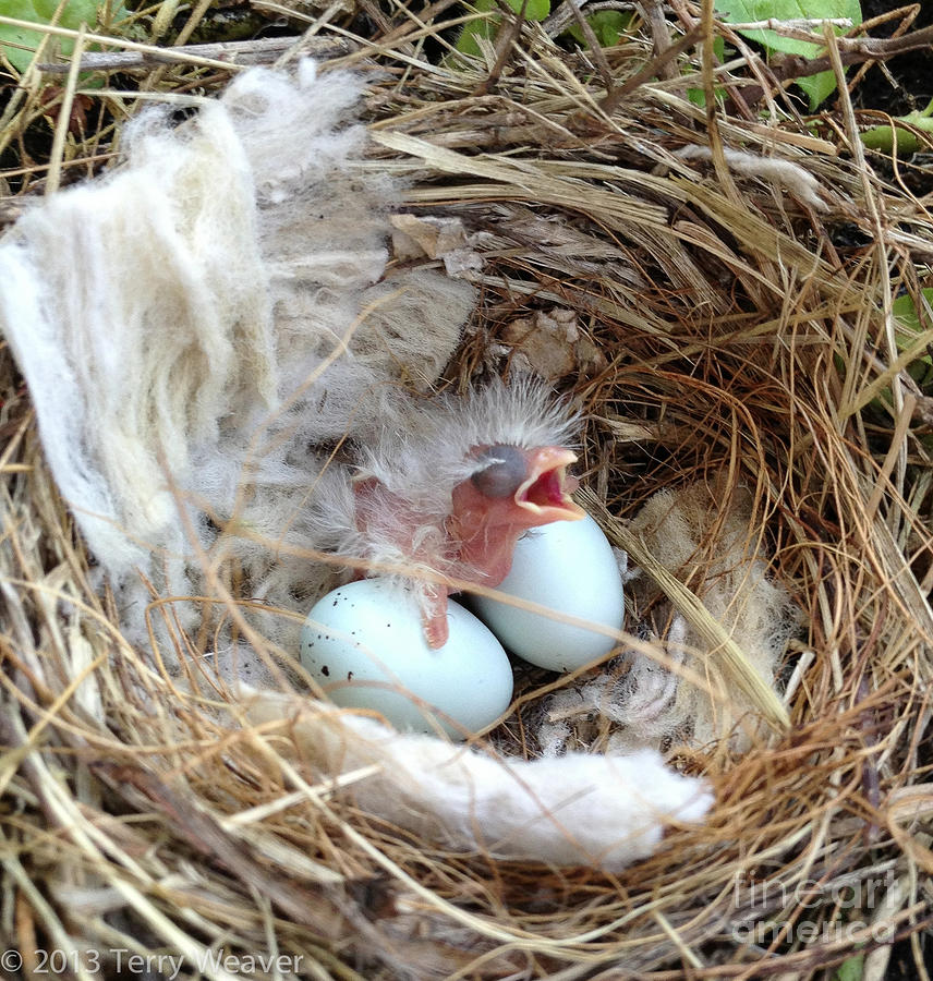 Newborn Baby Bird Photograph By Terry Weaver