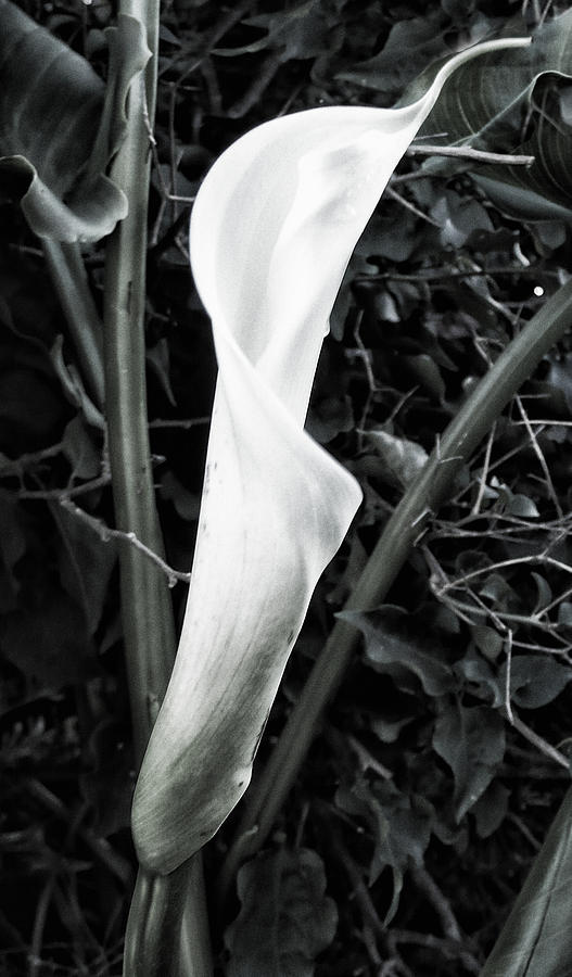 Flower Photograph - Newborn by Ron Regalado