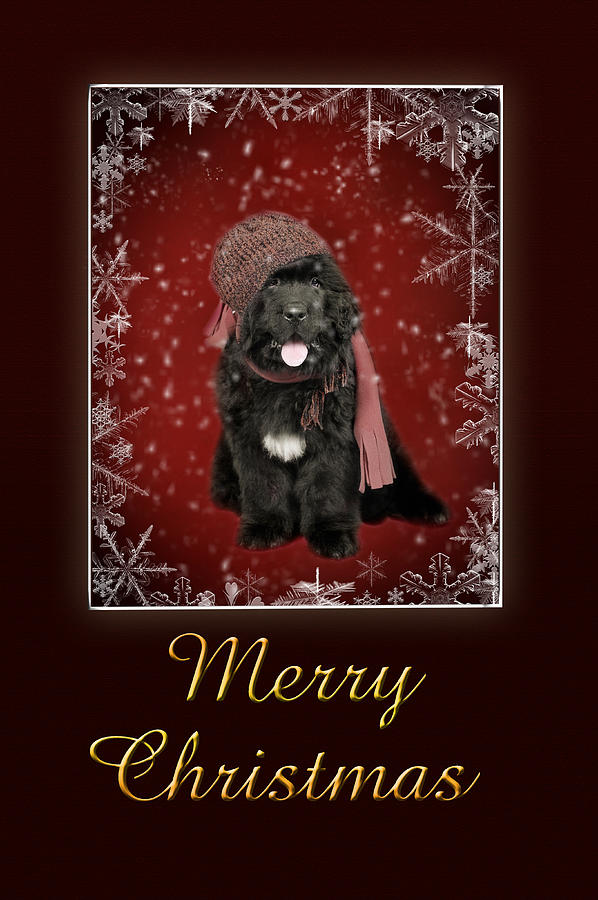 Newfoundland Christmas Card Photograph By Waldek Dabrowski