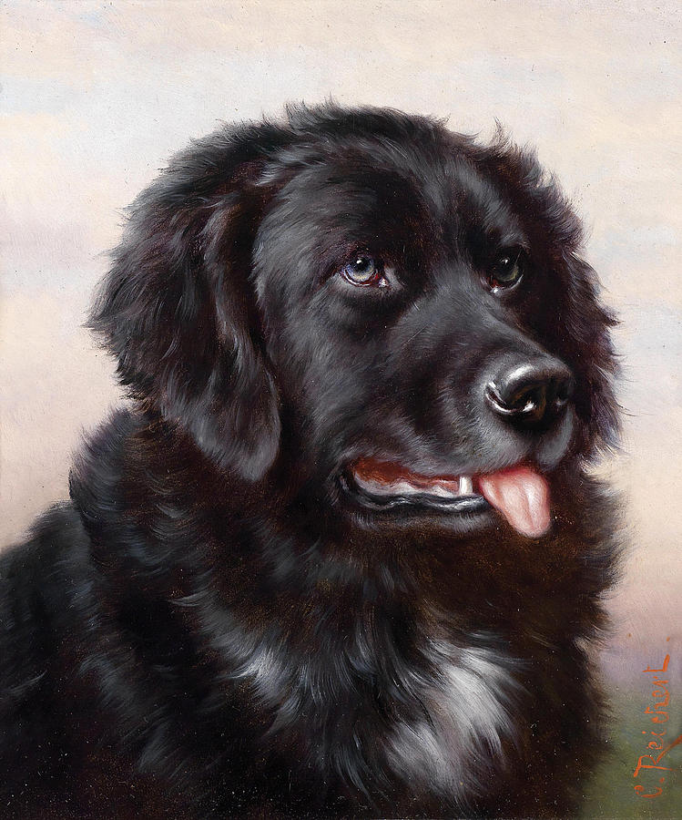 Newfoundland Dog Painting By Carl Reichert