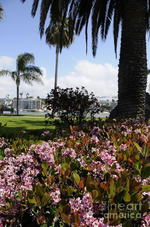 Newport Beach Photograph - Newport Beach California by Timothy OLeary