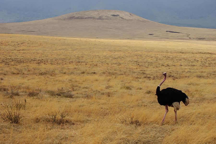 Ngorongoro Crater, Tanzania Photograph by David Min