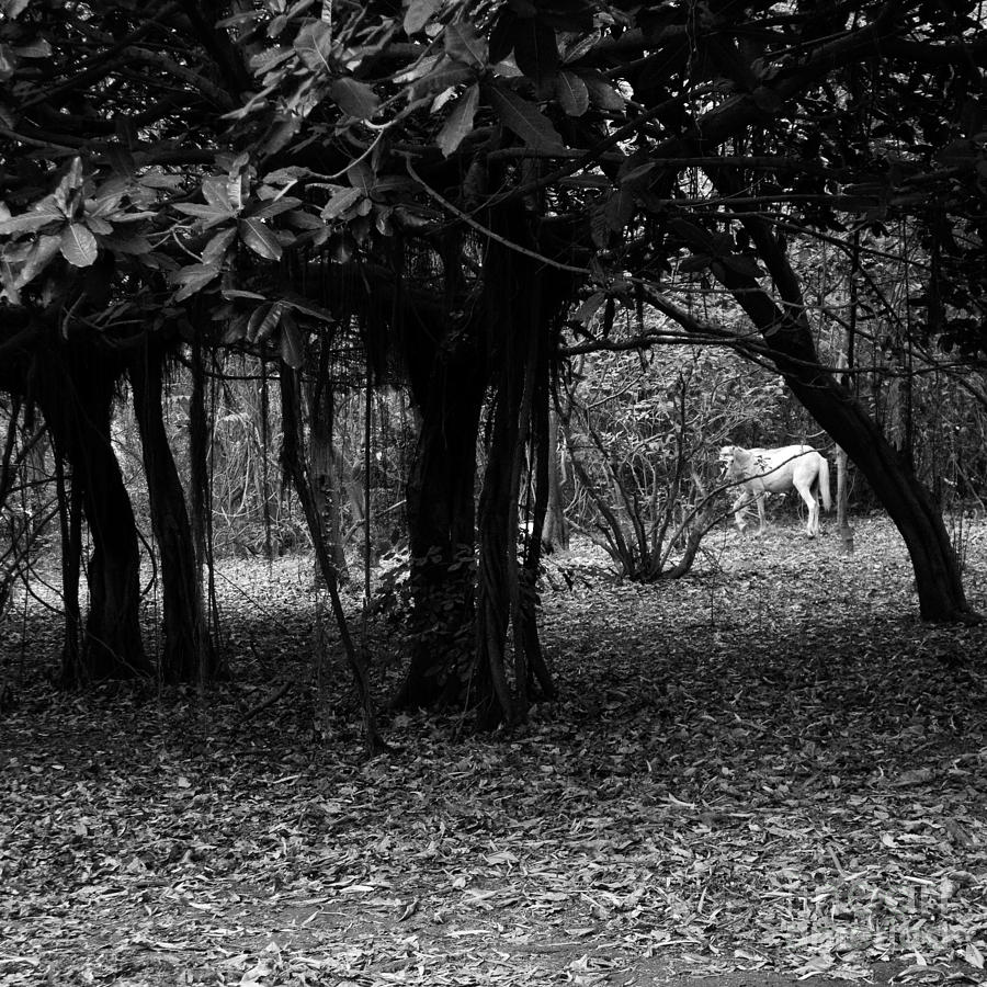 Nicaragua Photograph - Nicaragua-fineart-23 by Javier Ferrando