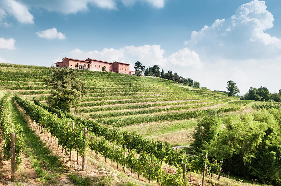 Nice Vineyard Landscape In North Of Photograph by Bosca78