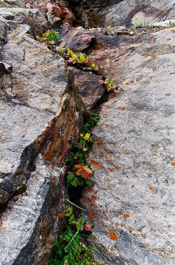 Crevice Photograph - Niche by Trever Miller