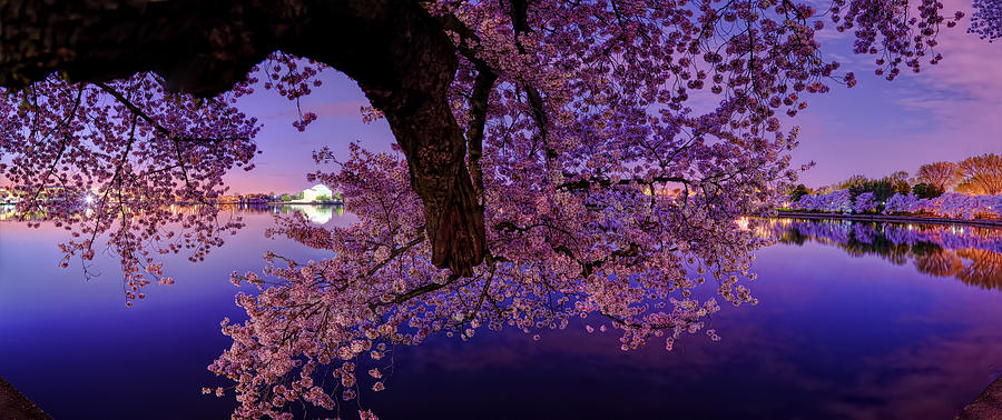 Dc Photograph - Night Blossoms by Metro DC Photography