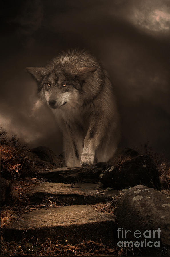 Wolf Digital Art - Night Breed by Lynn Jackson