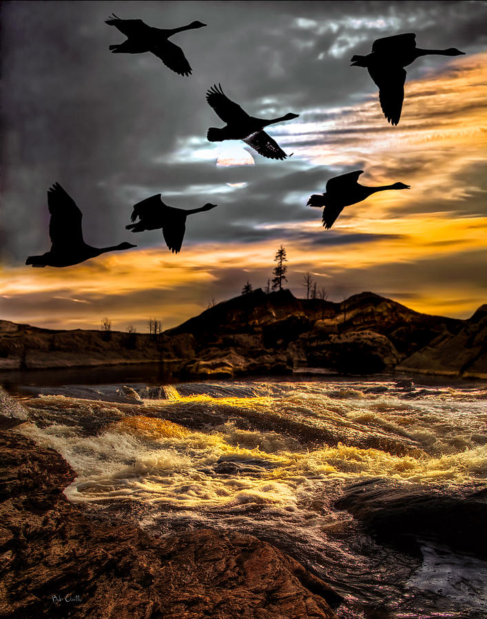 Canadian Geese Photograph - Night Flight by Bob Orsillo