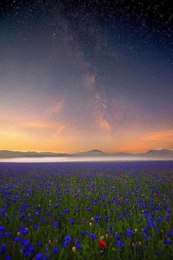 Night Flowers Photograph by Roberto Marchegiani