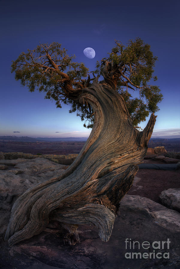 Canyonlands Photograph - Night Guardian Of The Valley by Marco Crupi