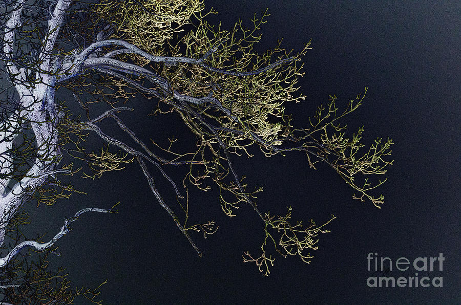 Tree Photograph - Night by Lois Bryan