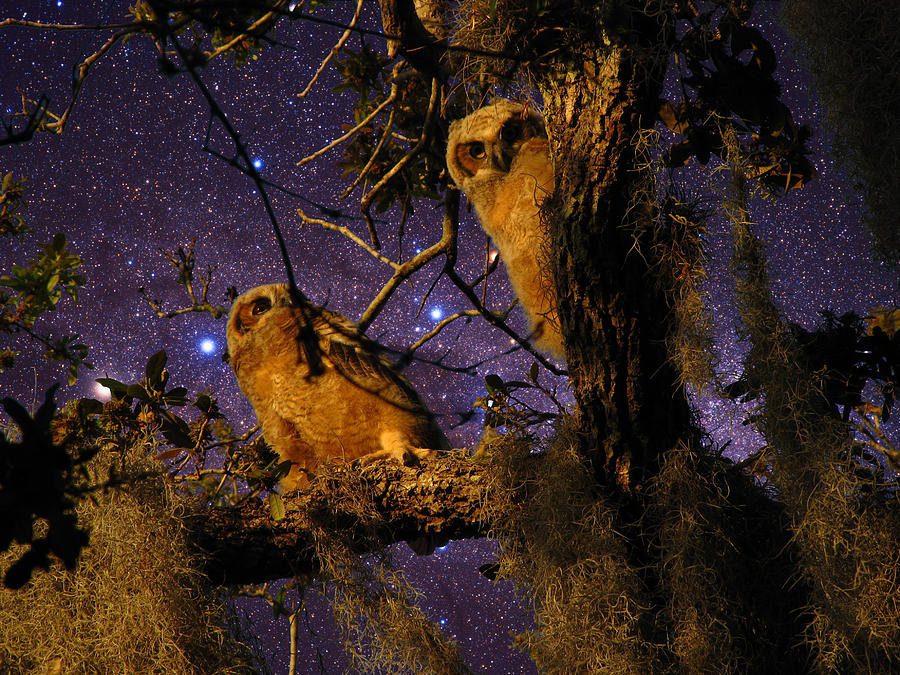 Phil Photograph - Night Owls by Phil Penne