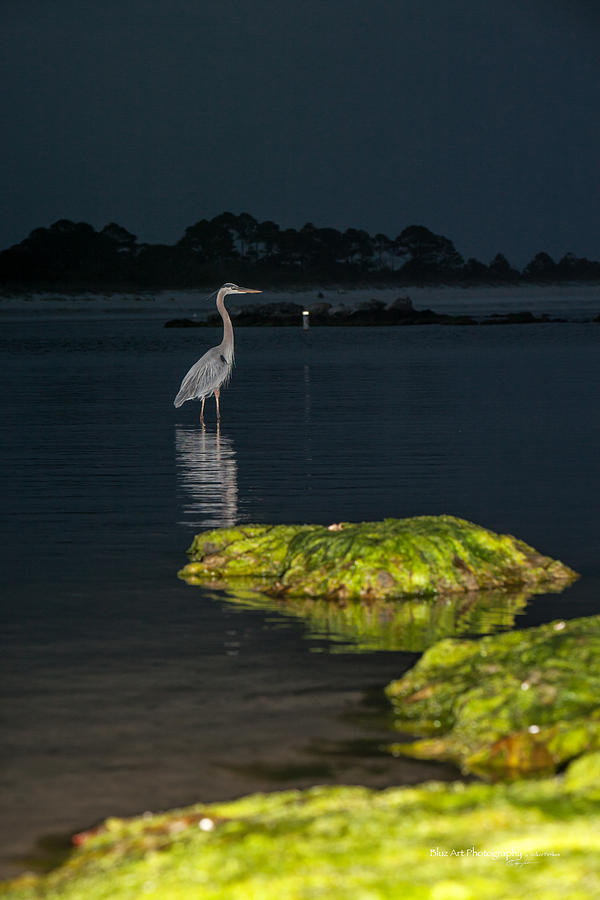 Heron Photograph - Night Stalker by Volker blu Firnkes