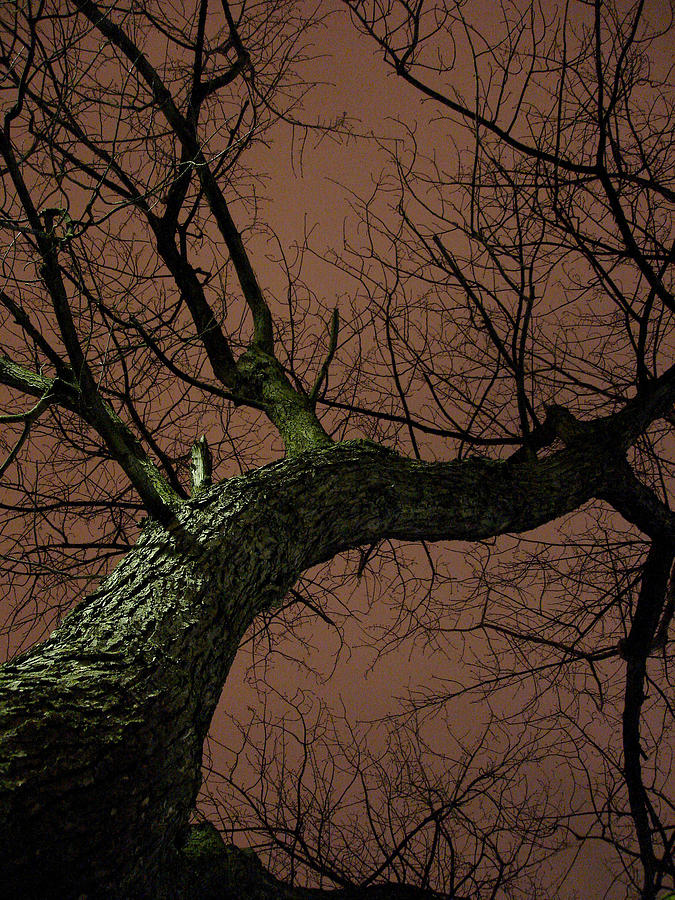 Nature Photograph - Night Tree by Michel Mata