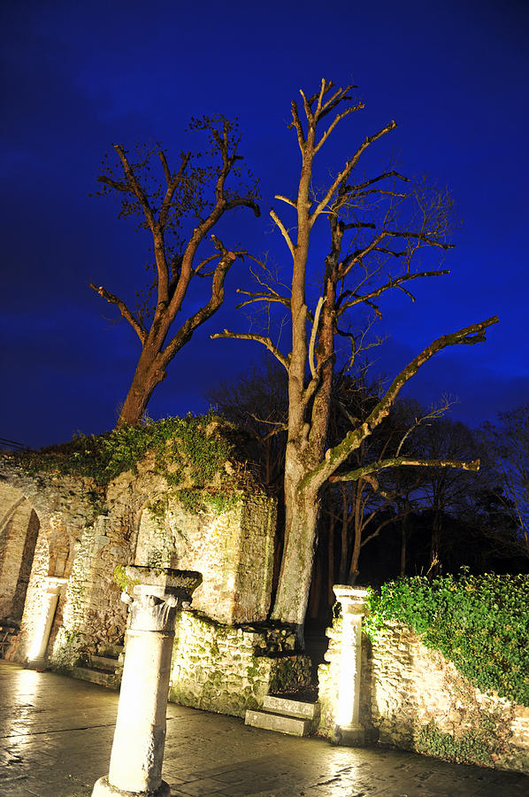 Trees Photograph - Night Trees by Stephen Richards