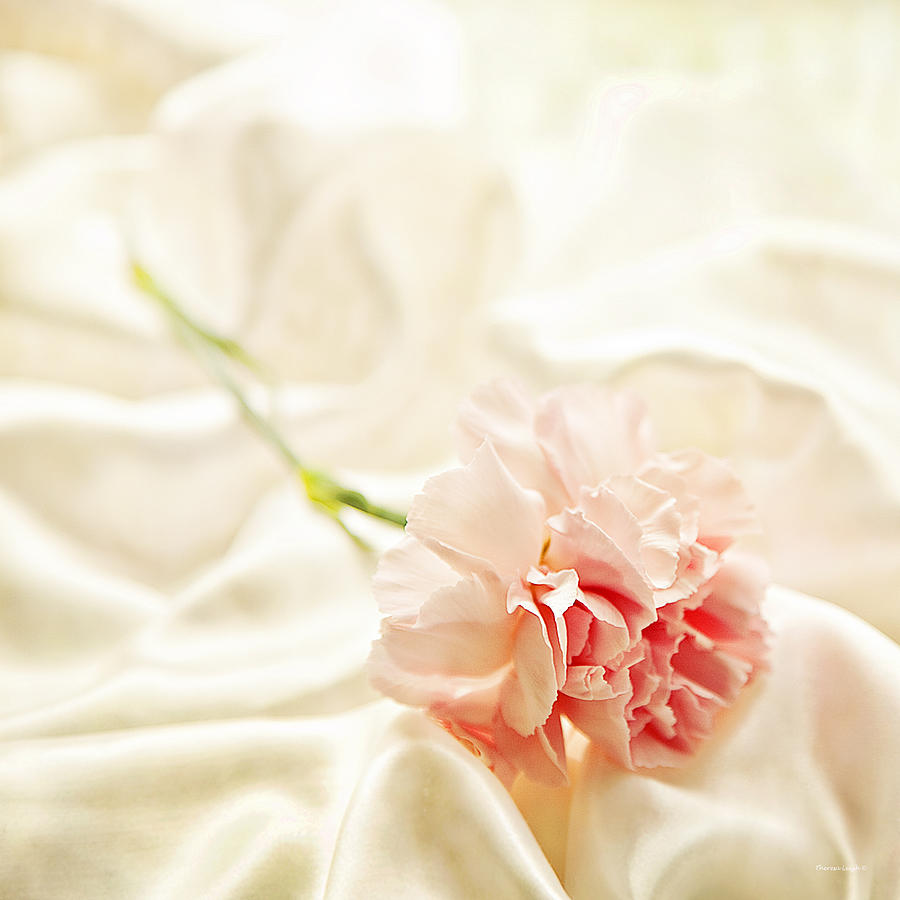 Satin Photograph - Nights In White Satin by Theresa Tahara