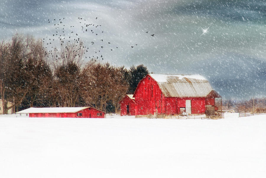 Nights Snow Dust Photograph by Mary Timman