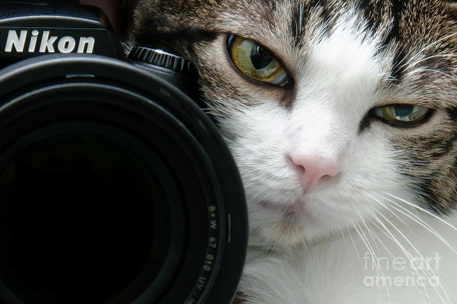 Cat Photograph - Nikon Kitty by Andee Design