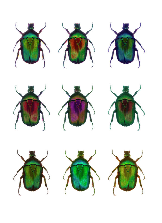 Nine Beetles Against A White Background Photograph by Richard Boll