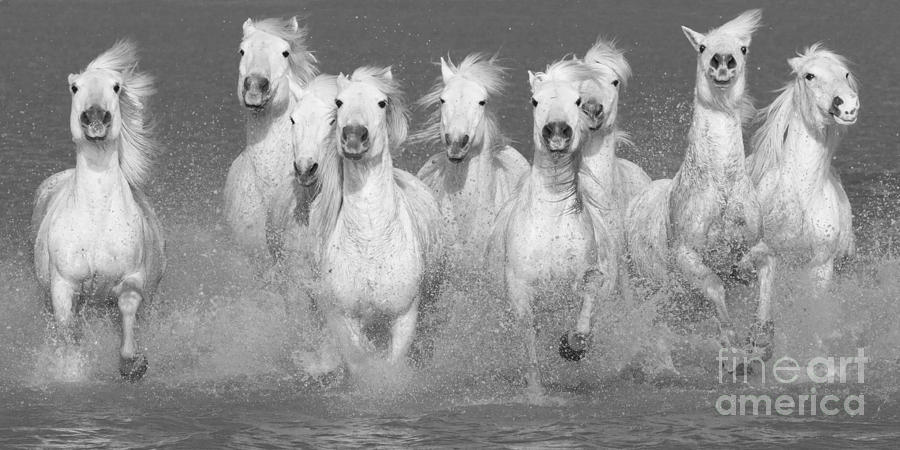 Nine White Horses Run Photograph By Carol Walker