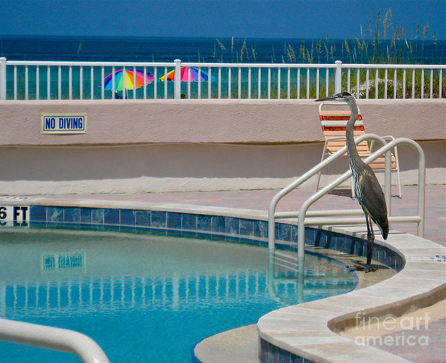 No Diving by Joan McArthur