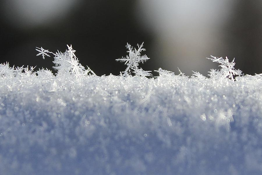 Snowflakes Photograph - No Two Exactly Alike by Penny Meyers